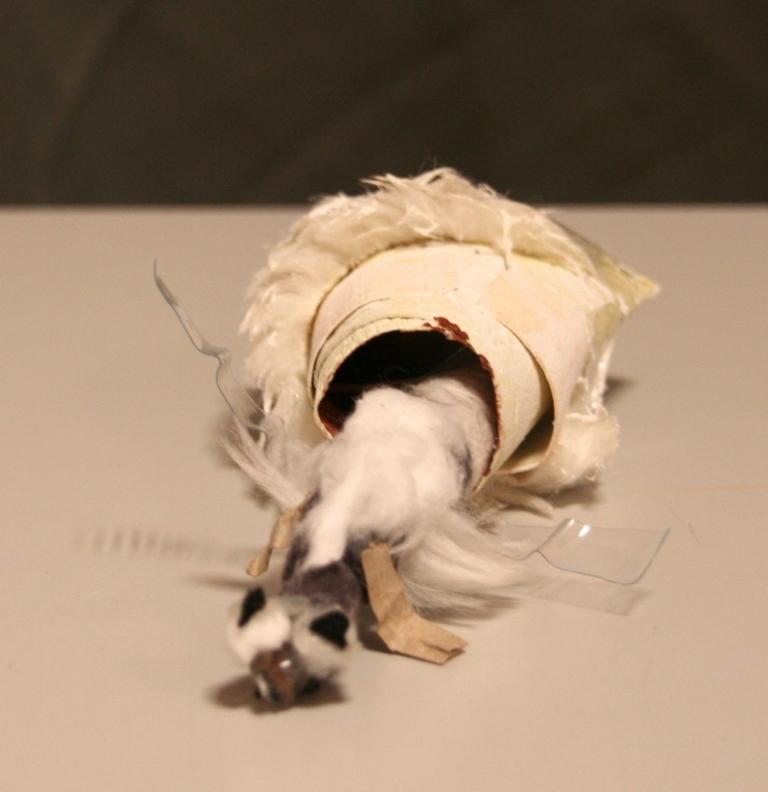 insecte-cocon10