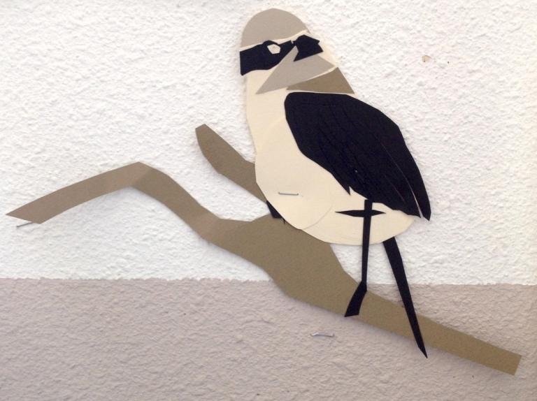 oiseau6